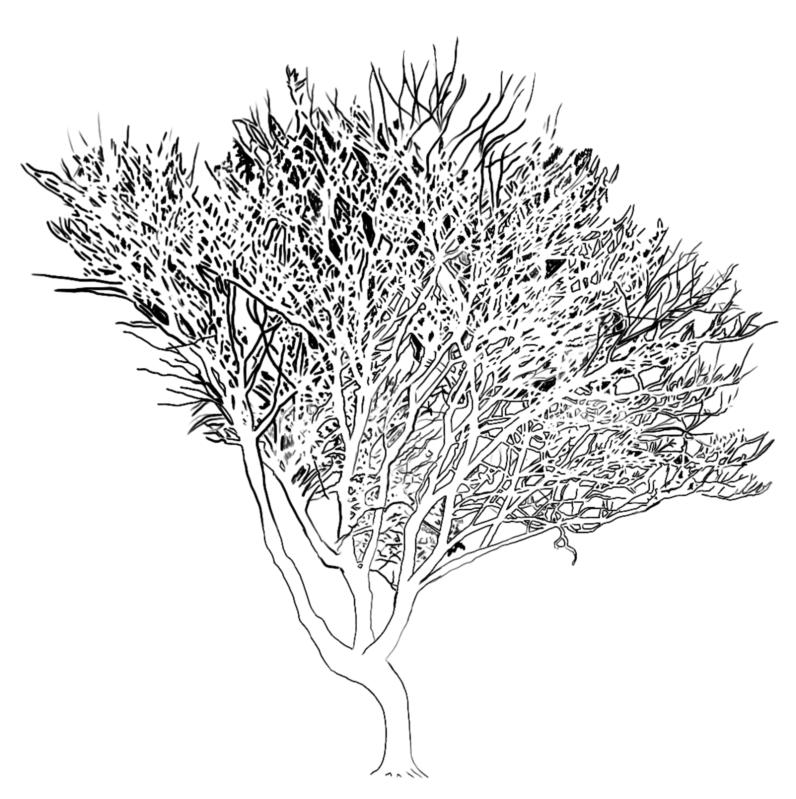 digital-ink-golden-rain-tree